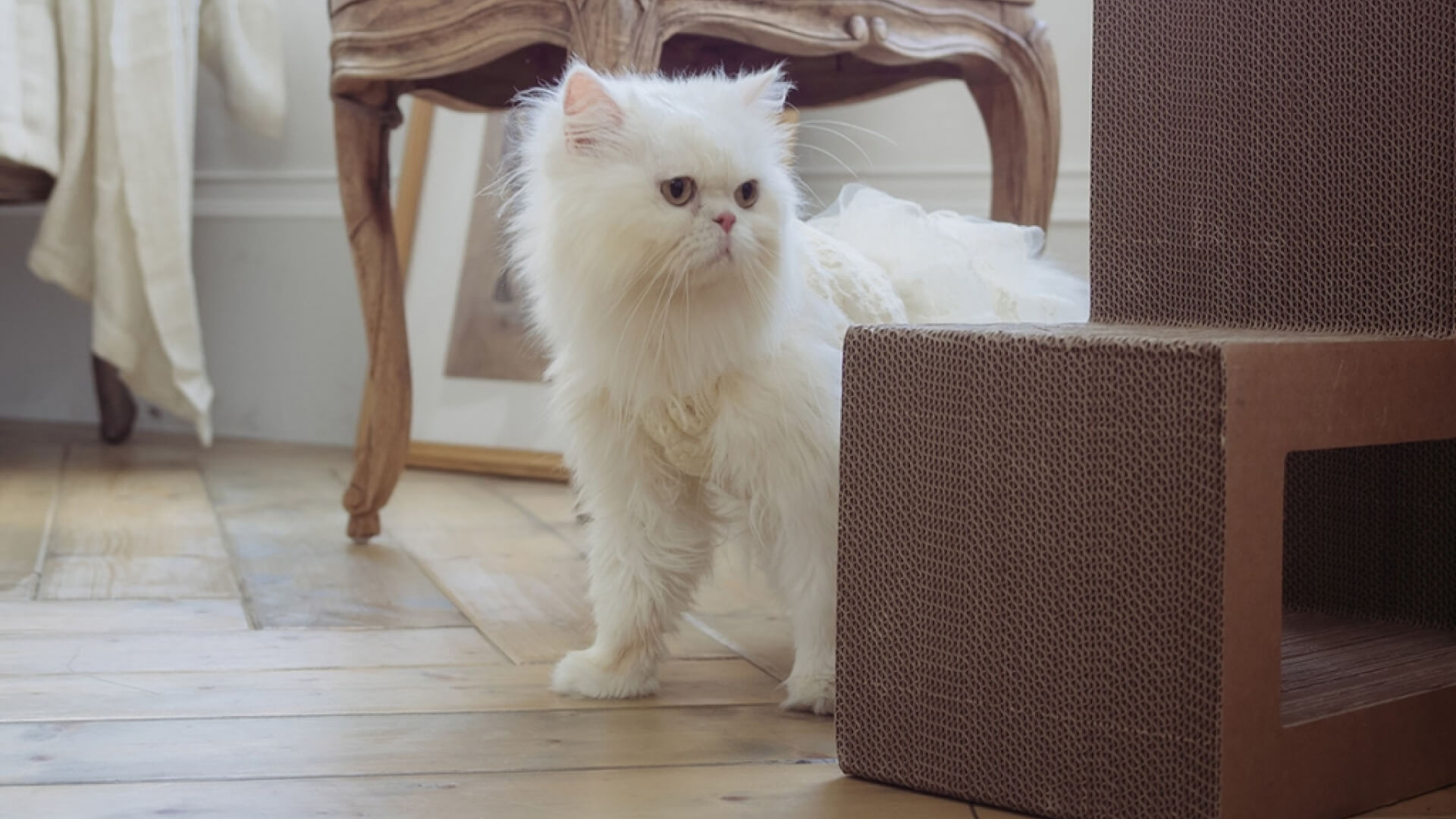 KATRIS Cat Blog