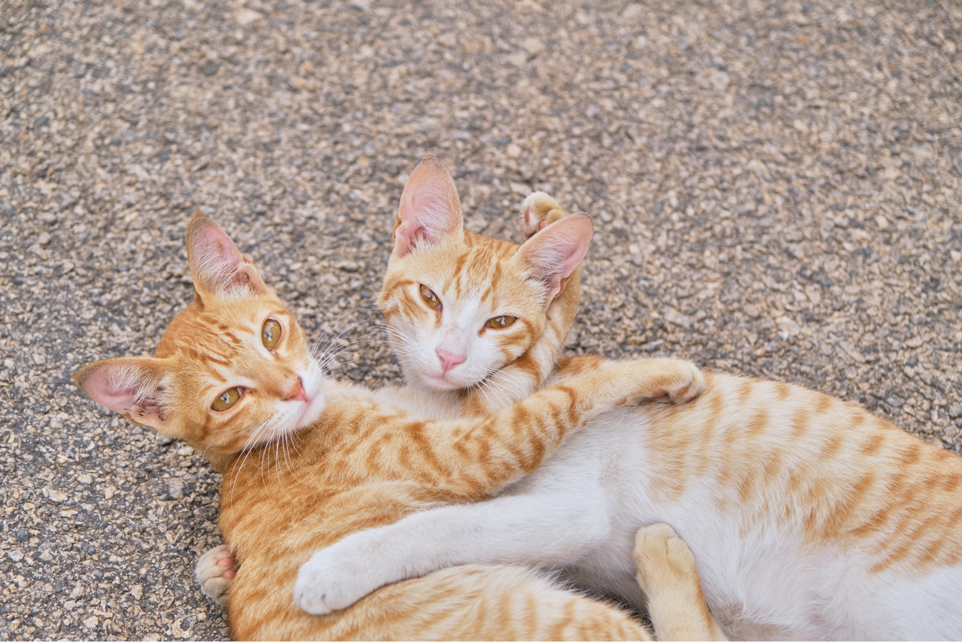 Top Ideas for How to Celebrate Cuddly Kitten Day