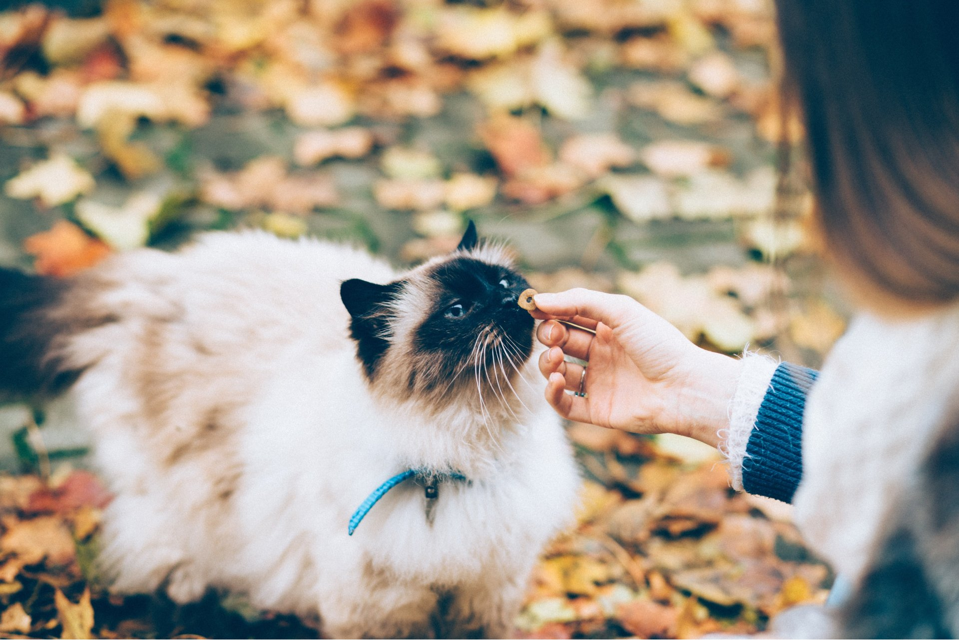Top Tips on Feeding Picky Cats